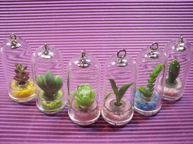 Capsule Mini Plant