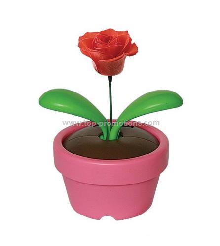 Solar Dancing Rose